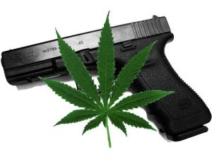 marijuana-and-weapons